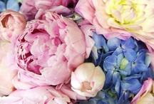 Cold, soft flowery inspiration / Flowers that I like. First volume. Pinks, pastels, soft cold colors. For my inspiration.