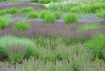 Grassy massy....