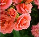 gardening and beautiful flowers / by Ricki Pentz-Dunn