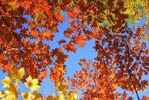 Autumn / Herfst / by Jip by Jan | Janneke Assink