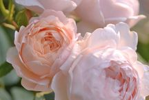 flowers & bouquet