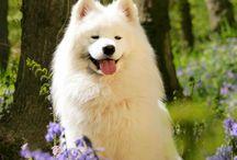 Honden Fotoshoot