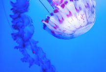 JellyJelly-FishFish