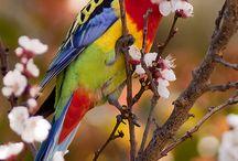bird stuff / by Melissa K Kissner