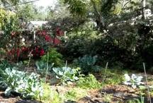 TampaLandscapeDesign.com Vegetable Garden Design
