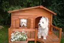 a proyecto casa perro elite