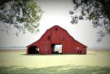 Barns / by Heidi Nyman
