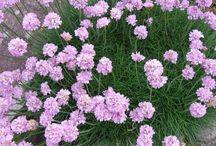 Ogrod - rosliny