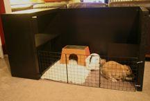 Bunnies / by Kelly Prizel