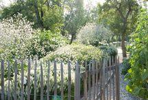 puutarha,garden