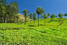 Munnar tour packages / Munnar is marked by vast expanses of tea plantations, colonial bungalows, rivulets, waterfalls and cool weather. It is also an ideal destination for trekking and mountain biking.