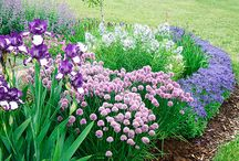 Garden: Perennials