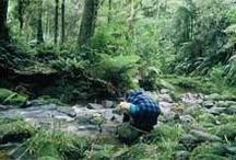 Tramping ....New Zealand Tracks.....Kaimais / Local walks