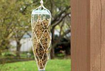 For the Birds / Attracting birds, feeding birds