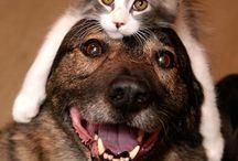 Jak pies z kotem