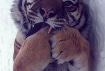 my tigers / by Wendy Florendo