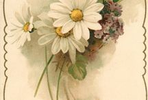 fiori x bustine