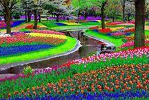 Netherlands 2015!