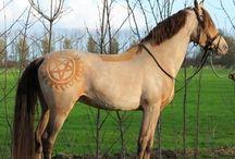 Barbert hest