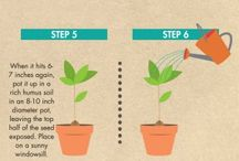 How to grow ..