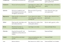 plant voedsel