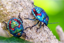 Bugs / by Jim Frederich