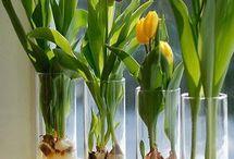 Tulipanes y otras amigas :) / Flores