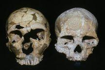 Homo Sapiens e outras espécies