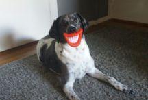 Bruno / Hund
