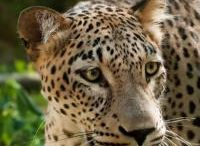 Endangered Animals / Threatened animals to protect for future generations