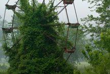 Quand la nature reprend ses droits dans des lieux abandonnés ! Magique…