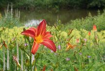 Květiny, rostliny / flowers