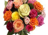 Flowers / Send Flowers to Kolkata