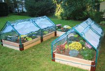 Gardening: Tips, Tricks, & Ideas