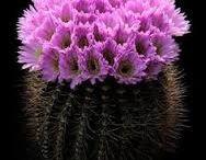 Succulente&cactus (-10°)