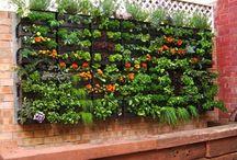 Garten senkrecht