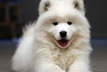 It's So Fluffy / Cute & Funny Animals