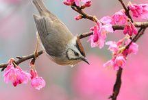 Spring Inspiration / The elegance of spring.