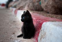 Catcontent / Katzen!!!