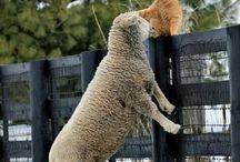 Hayvanlar ve doğa