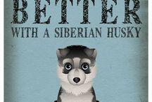 Siberian Huskies and Malemutes