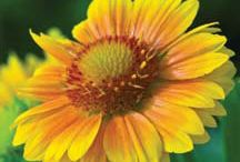 Perennial Seeds- Jung Seed Company