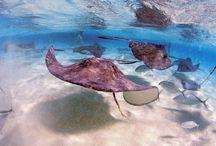 Cayman Islands / by Jeannine Mantooth