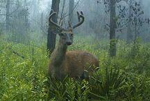 Florida Wildlife / by Dip-N-Vat Hunting Club, Inc.