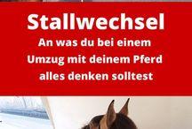 Stallgeflüster / Stallgeflüster, alles rund um Pferd & Reiter