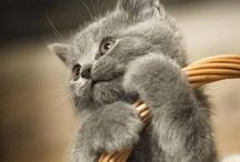 cute and cuddley