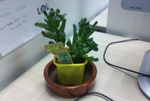 My plant in the office