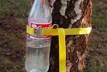 tree sugar