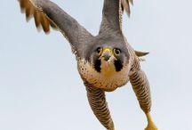 Птицы редкие