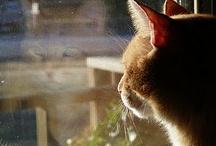 Stunning Animal and Bird reflections